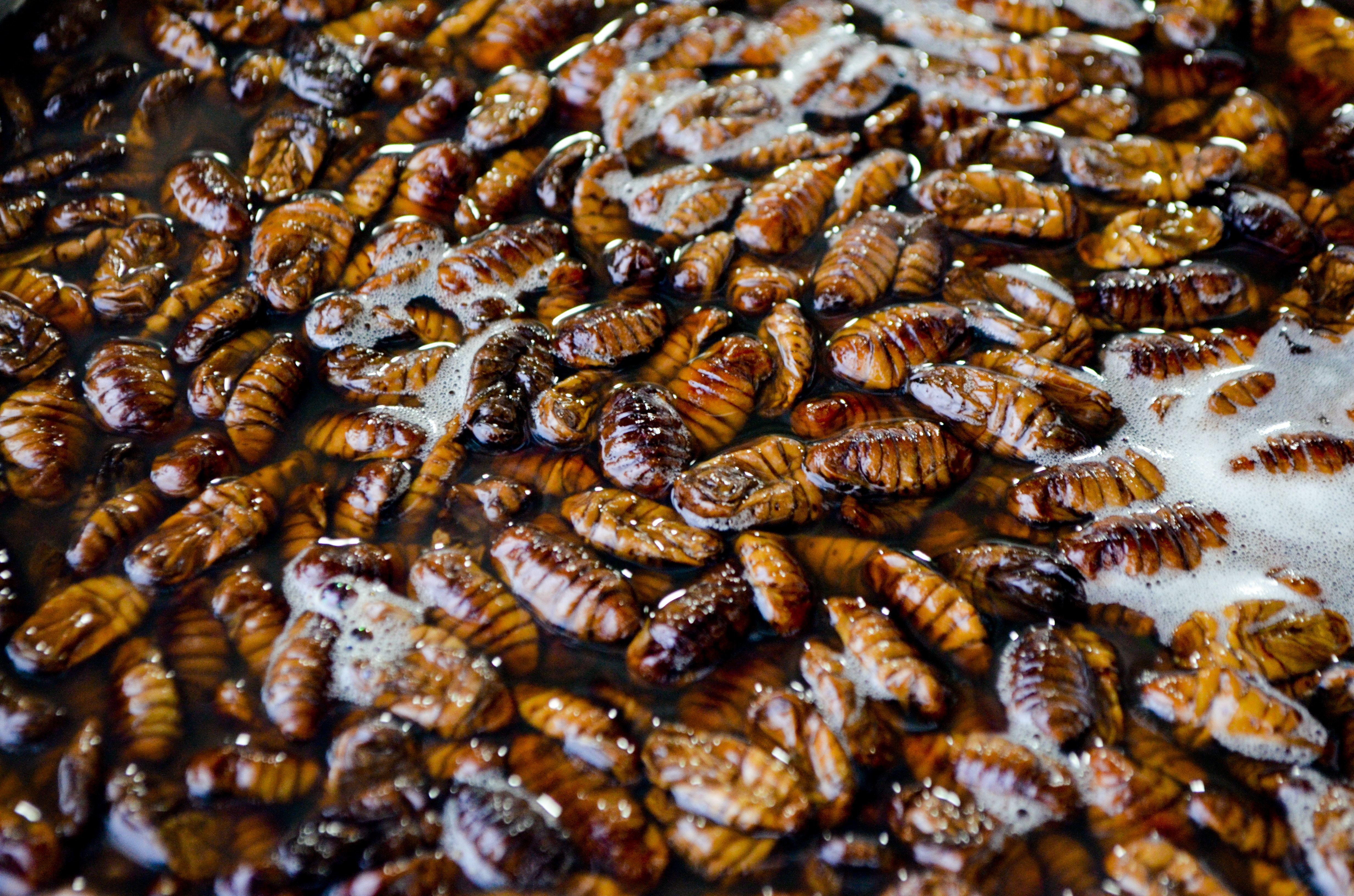 Are cockroaches ruining your business?