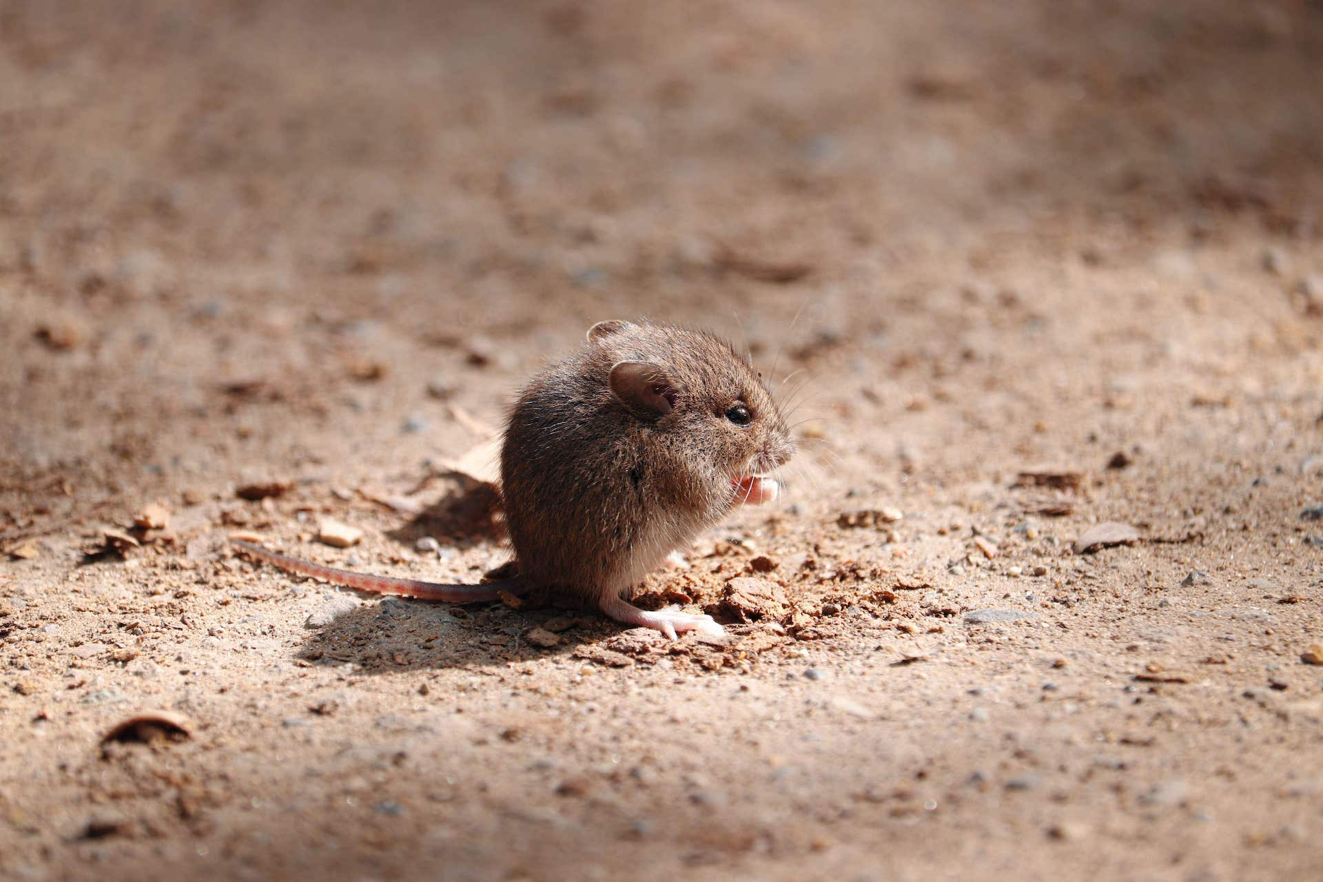 Are rodents messing with your business?